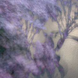 Shadows, fine art photography, lilac, flowers, abstract photography