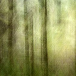 Forest-walk-yoga-breath, photography inspired by yoga breath, nature photography, fine art photography,