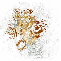 Fine art print of abstract rose petals, textured paper, works on paper by ellen scobie