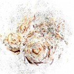 Fine art printmaking, digital aqueous inkjet print, delicate colours and textures of rose petals