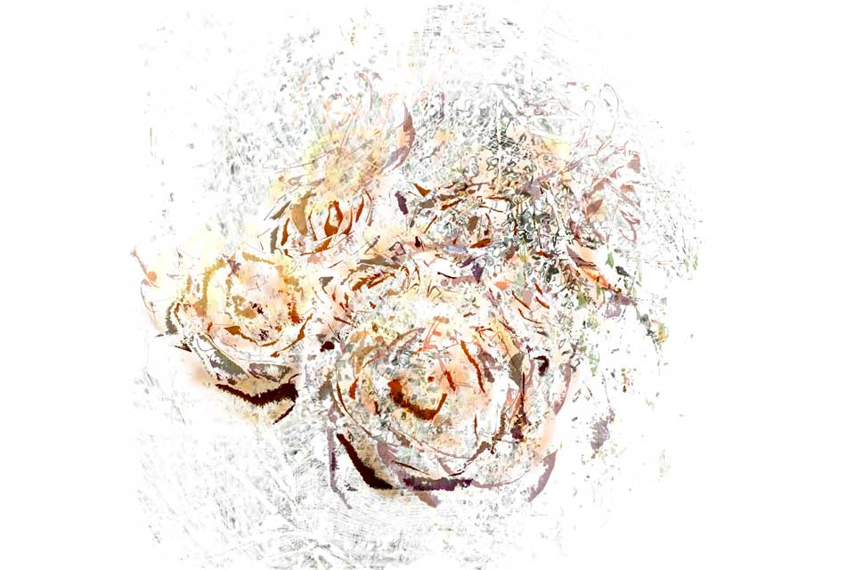Fine art printmaking, digital aqueous inkjet print, delicate colours and textures of rose petals