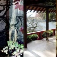 fine art photograph, photography, japanese garden